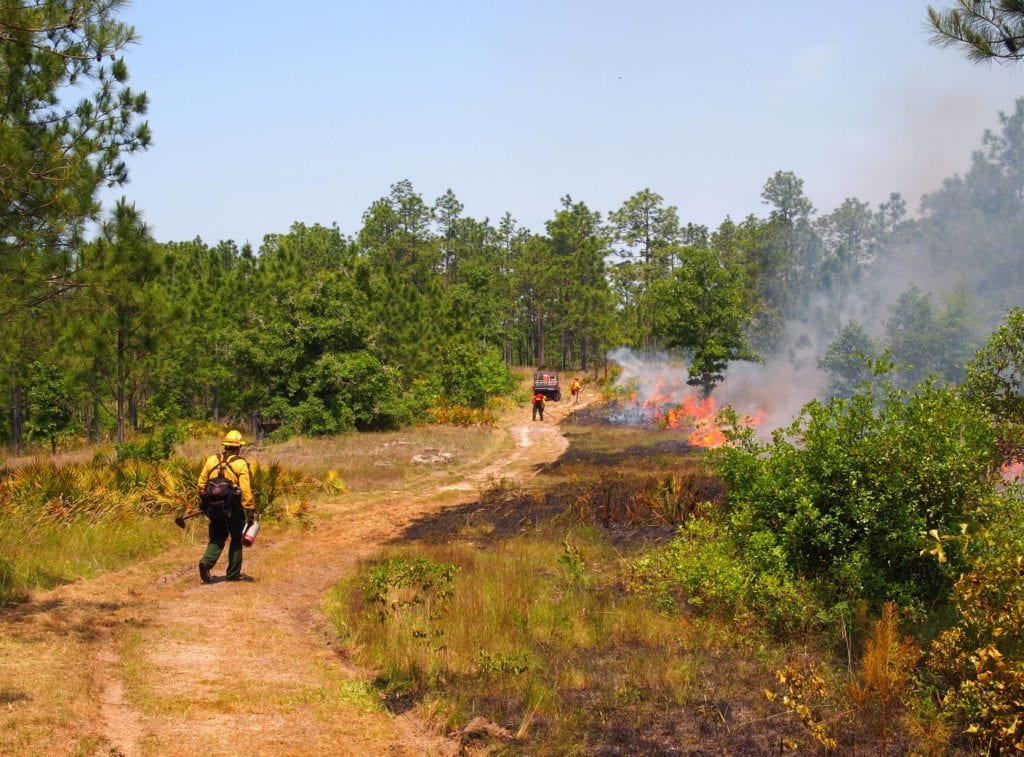 Georgia's Interagency Burn Team conducting a prescribed burn at The Nature Conservancy's Broxton Rocks Preserve in Coffee County, GA. Photo by Randy Tate.