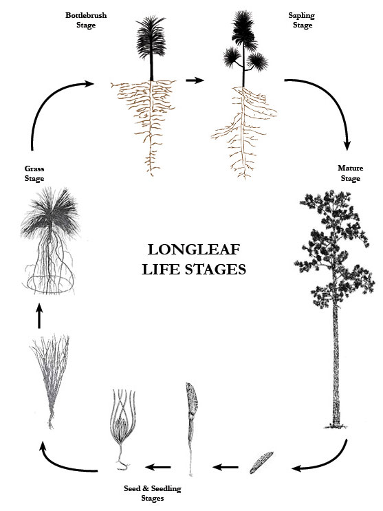 lifestageinfographic_vertical