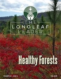 longleaf_cover