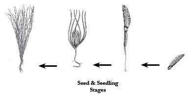seedandseedling